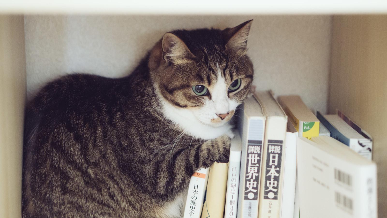 本に寄りかかるネコ