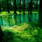 森の水たまり