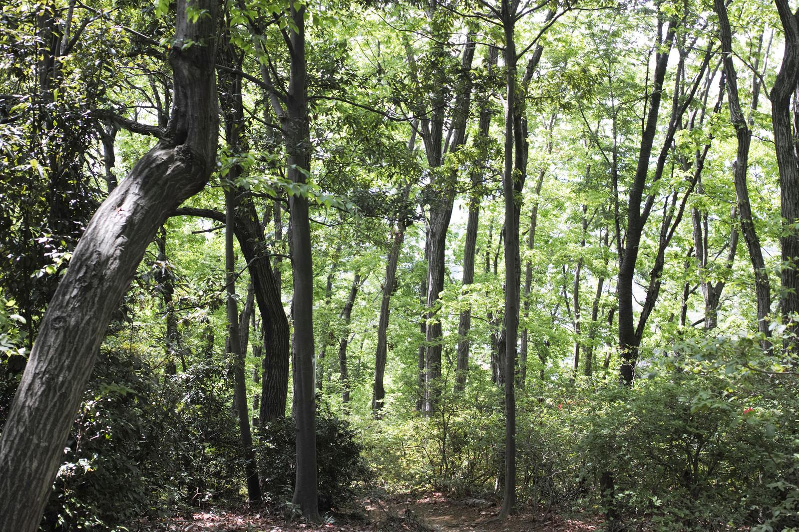 オラウータンがいる森